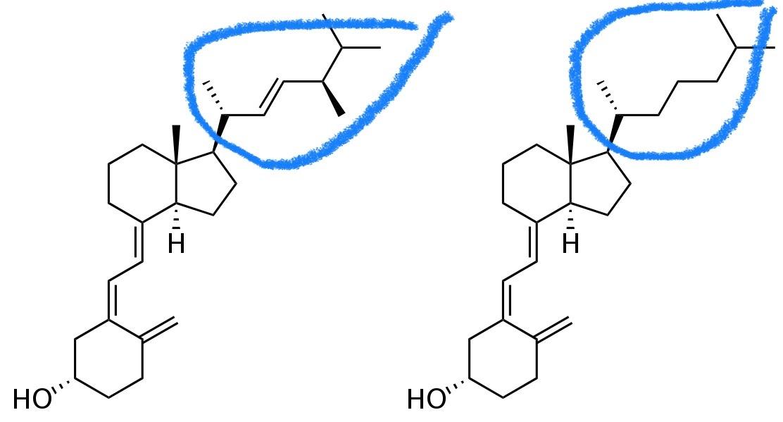 Vitamines D2 et D3