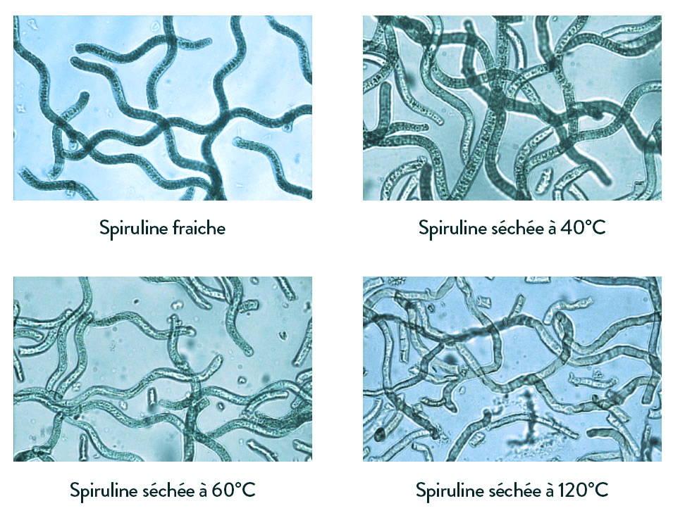 Méthodes de séchage de spiruline