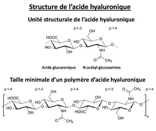 Structure de l'acide hyaluronique